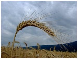 salon_de_l_agriculture_avec_les_centres_d_initiatives_pour_valoriser_l_agriculture_et_le_milieu_rural_civam_une_agriculture_vivante_et_solidaire_est_possible