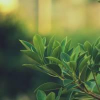 9 raisons de boire du thé vert