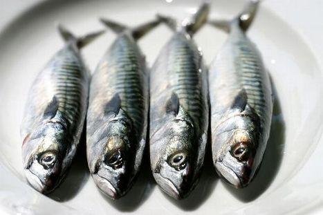 Le poisson et les acides gras oméga 3