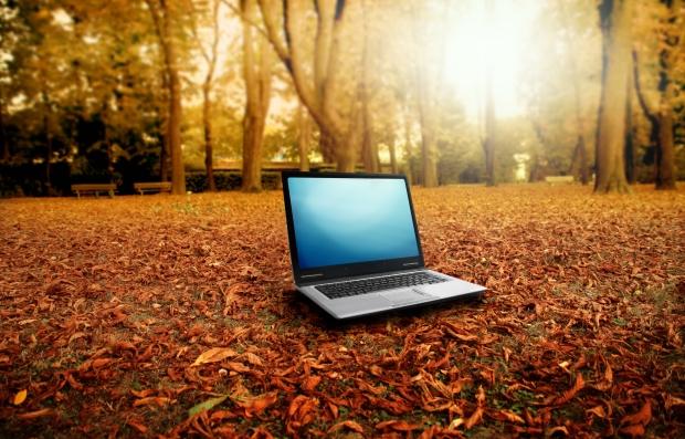 Arbres malades à cause du wifi ? © Photo : cnet.co.uk