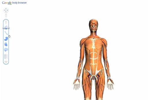 Google Body Browser demo