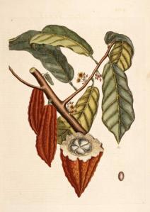 Les vertus santé du cacao