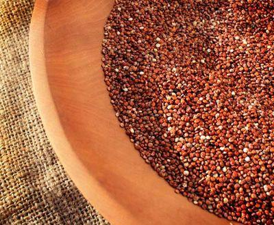 La quinoa : plante herbacée annuelle de la famille des Chénopodiacées, et de la tribu des Cyclolobae, cultivée pour ses graines riches en protéines