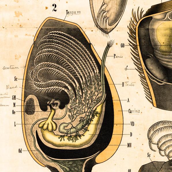 Une découverte scientifique sur les microbes du systeme digestif