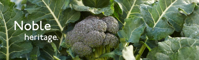 Beneforté : brocoli anticancer