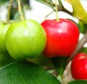 Acérola : un fruit puissant pour la santé