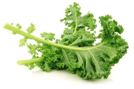Les bienfaits du Kale : légume chou vert