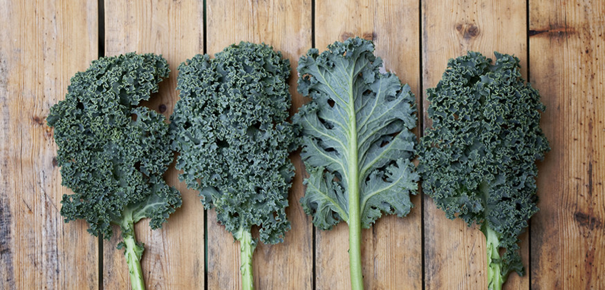 kale-supealiment-chou-vert-benefices-nutrition