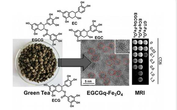 Cellular Imaging with Green Tea