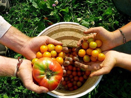 Agriculture biologique : les avantages