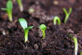 Agriculture bio définition