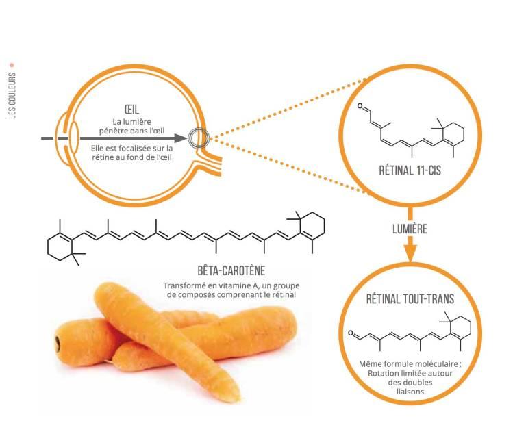 Les carottes permettent-elles d'améliorer la vision nocturne ?
