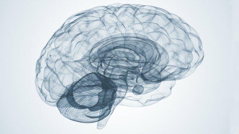 Régime amaigrissant et cerveau