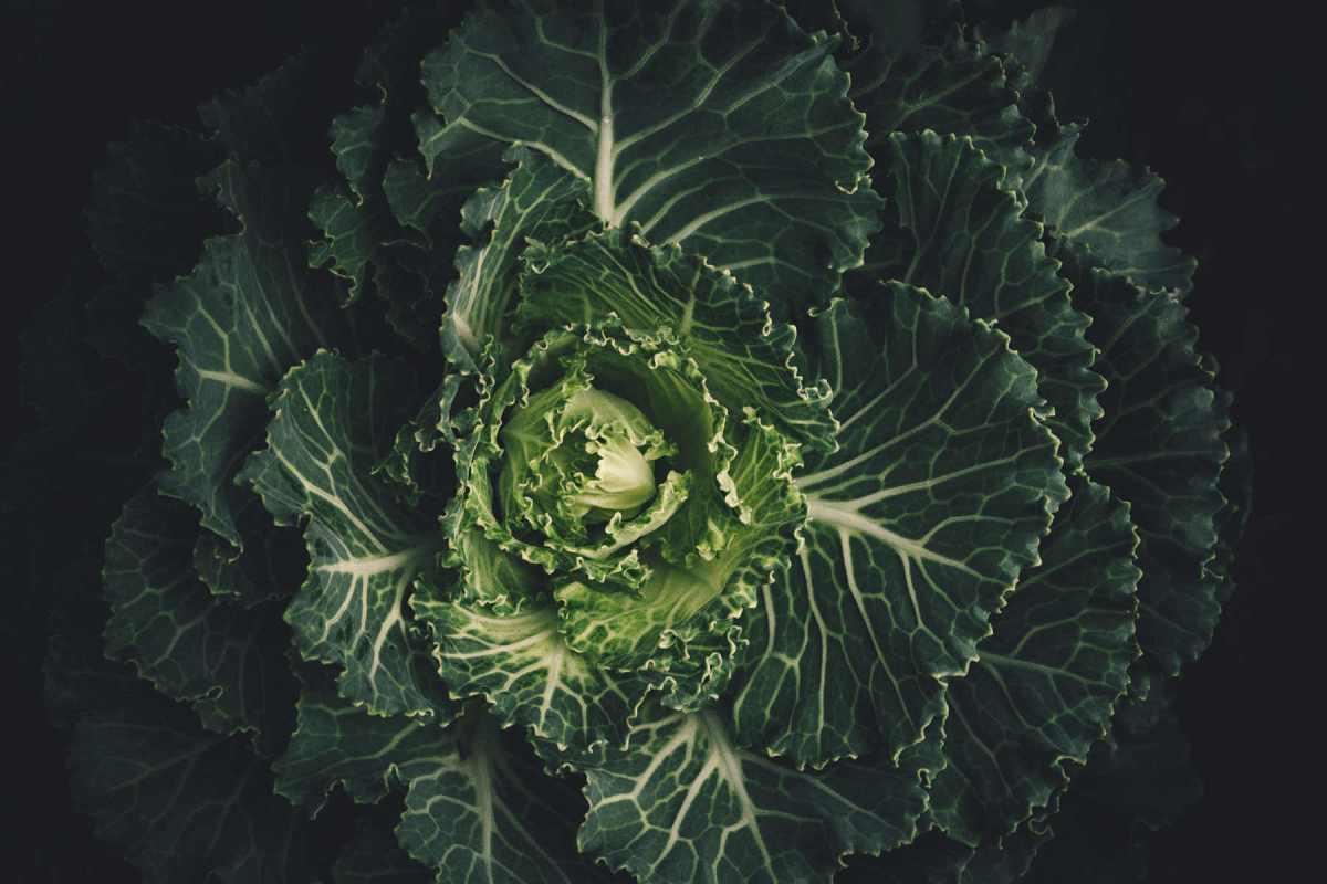 Les légumes verts ont des super-pouvoirs