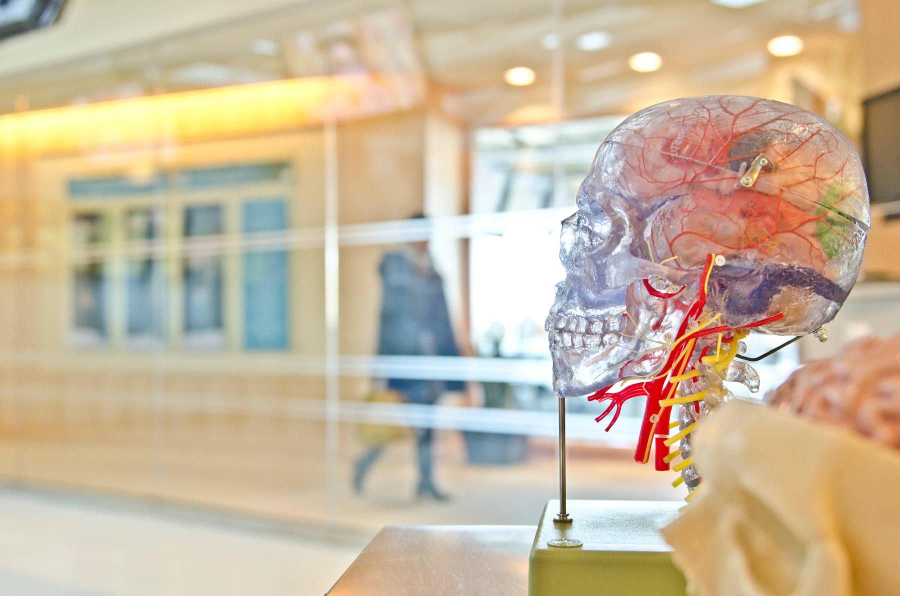 Découverte de la première preuve d'un « système de déchets » du corps dans le cerveau
