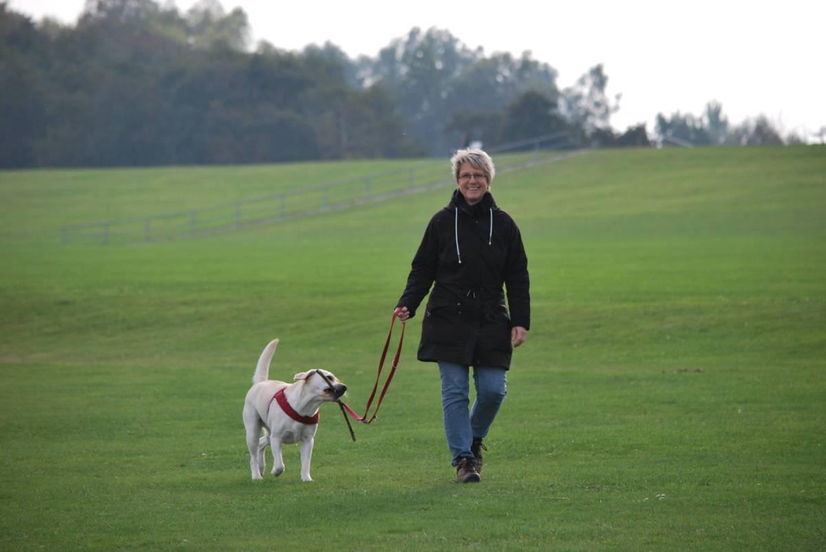 La marche diminue fortement le risque de mortalité, même en dessous des niveaux recommandés