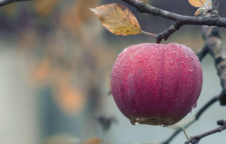 Supprimer les résidus de pesticides sur les pommes