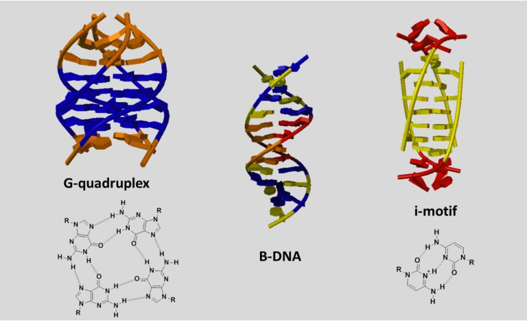 Unusual nucleic acid structures