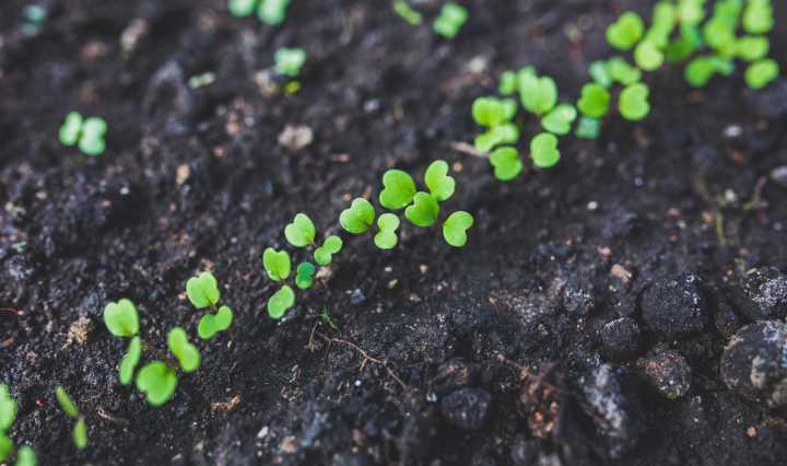 L'agriculture biologique contribue fortement à nourrir le monde plus durablement