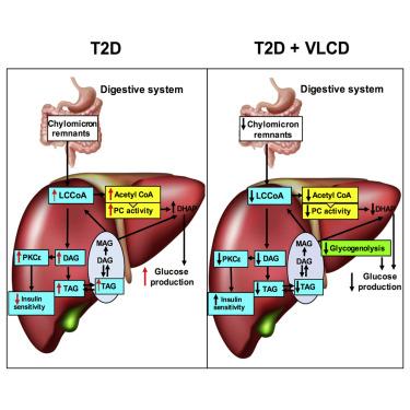 Comment un régime hypocalorique peut inverser le diabète de type 2 ?
