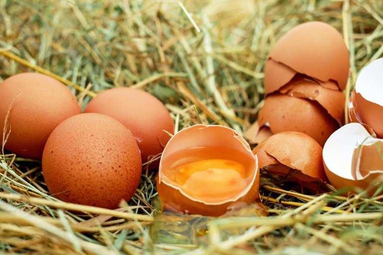 Les œufs améliorent les biomarqueurs liés au développement du cerveau des nourrissons