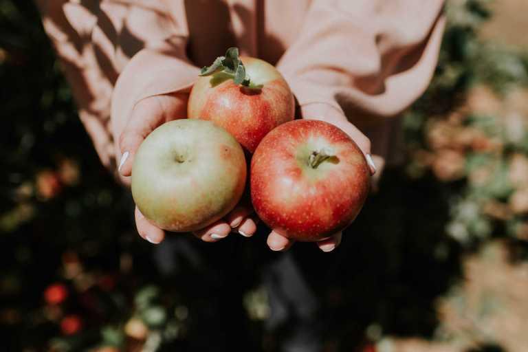 Bienfaits des pommes contre les dommages pulmonaires