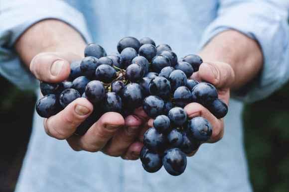 Le vin rouge est une riche source de polyphénols alimentaires