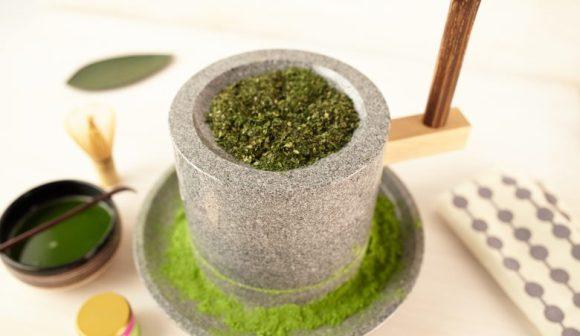 Le matcha est une poudre de thé vert