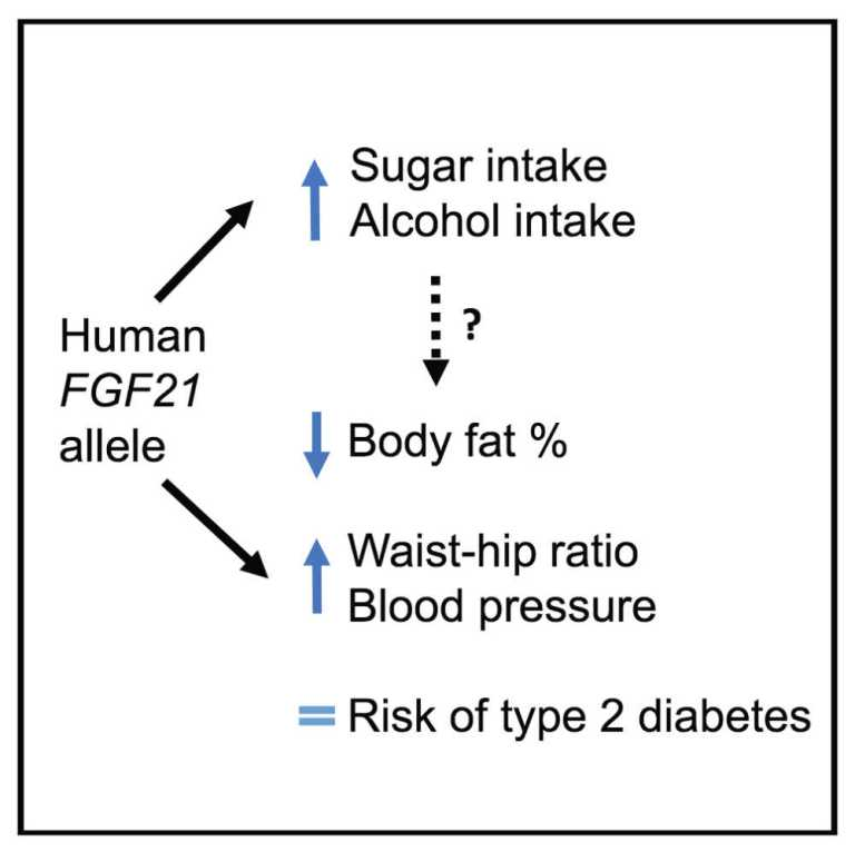 Facteur de croissance des fibroblastes 21
