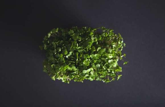 Le cresson peut absorber la vitamine B12