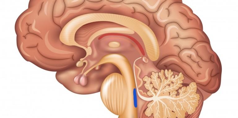Le locus coeruleus et le réseau de fronto-parietal