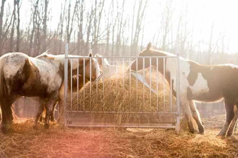 Grandir dans une ferme avec des animaux de la ferme