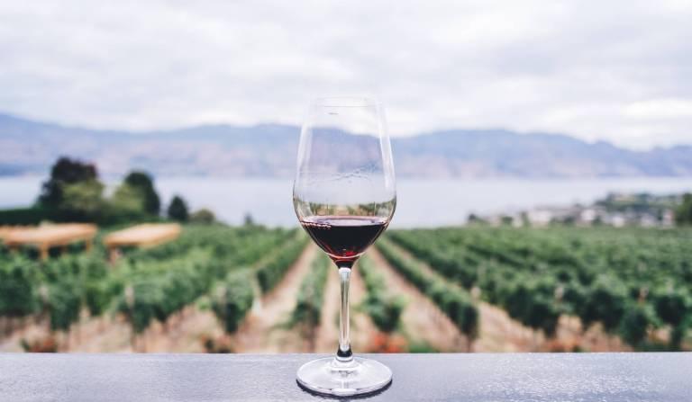 Les polyphénols du thé vert et du vin rouge contre les maladies métaboliques