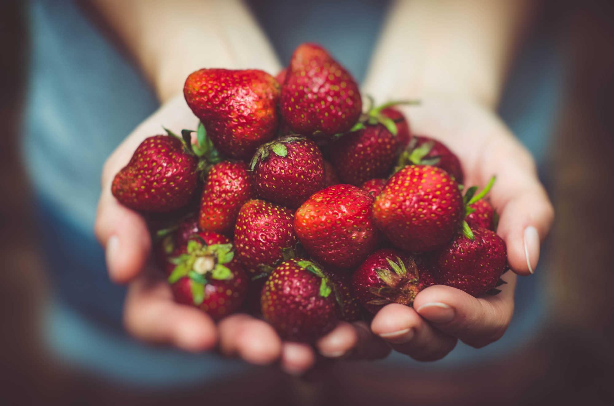 Les bienfaits des fraises pour la santé intestinale