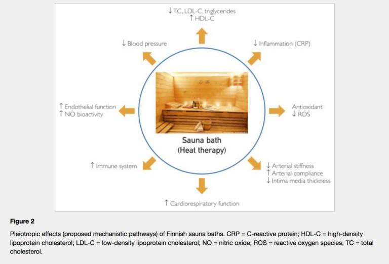 Les voies impliquées dans les bienfaits du bain de sauna