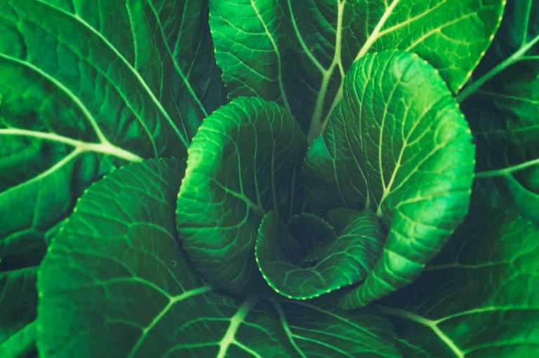 Bienfaits des légumes-feuilles pour prévenir la dégénérescence maculaire