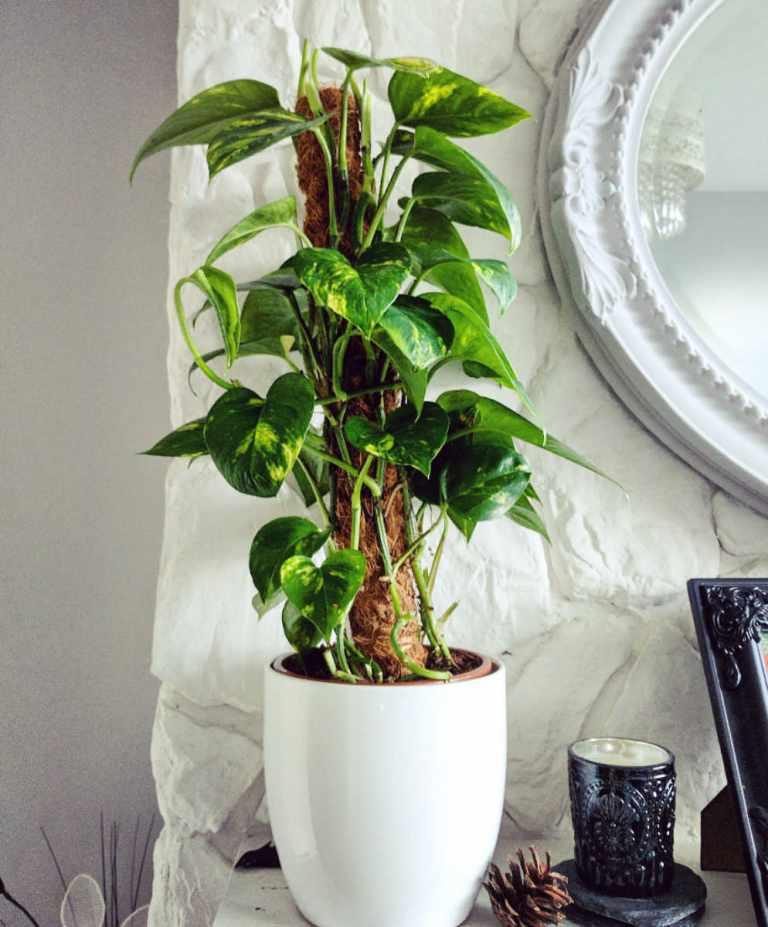 Purifier l'air environnant avec une plante