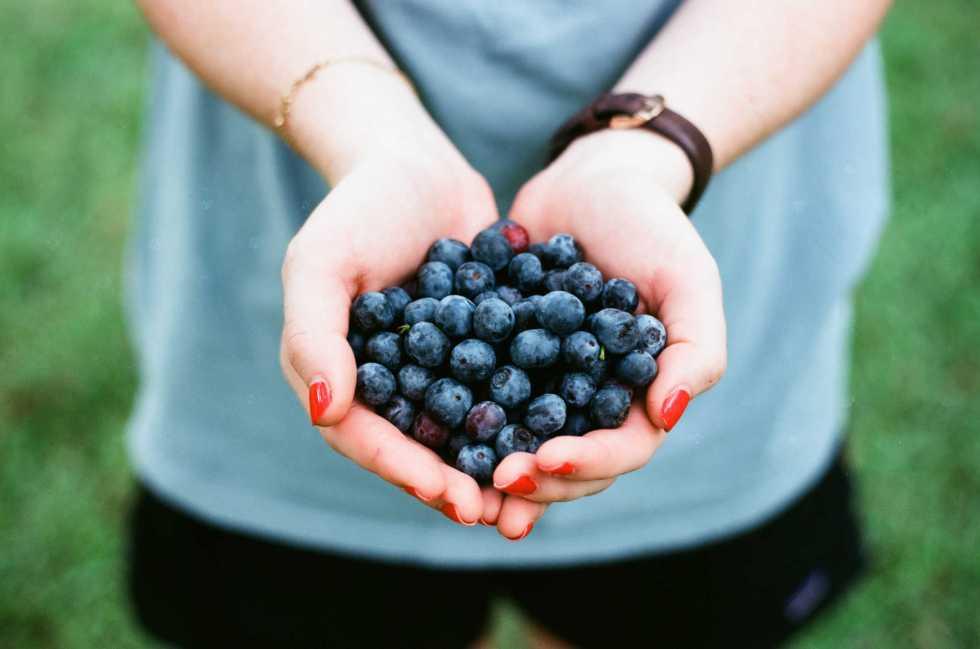Manger 200 grammes de myrtilles par jour réduit la pression artérielle