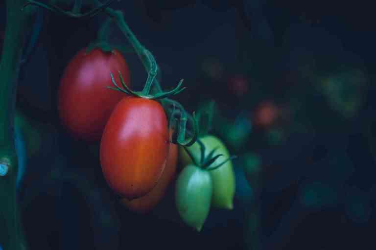 Les tomates sont une excellente source d'antioxydants