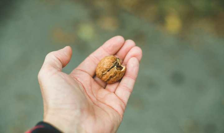 Les bienfaits des noix pour réduire la pression artérielle