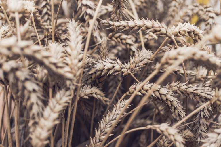 Les bienfaits de l'avoine : source de fibres et moins de cholestérol