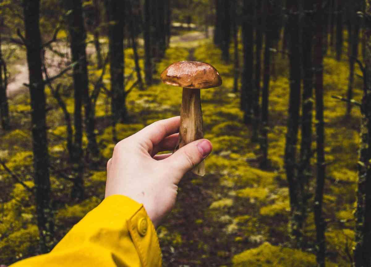 Les bienfaits des champignons contre le déclin cognitif