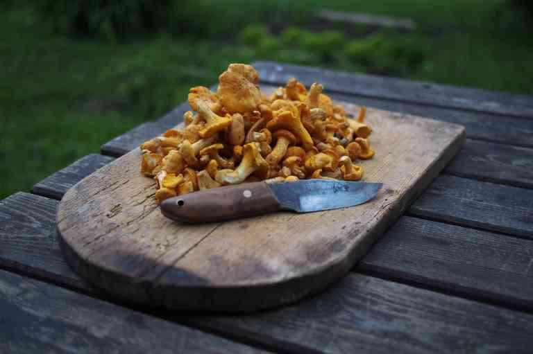 Manger des champignons