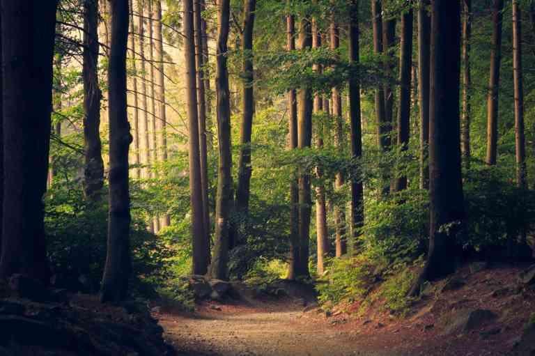 Promenez vous dans la nature au moins 18 minutes par jour