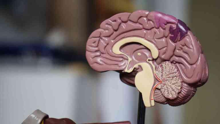 Santé cérébrale et alimentation
