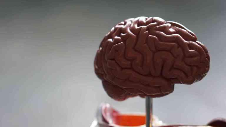 La santé du cerveau humain