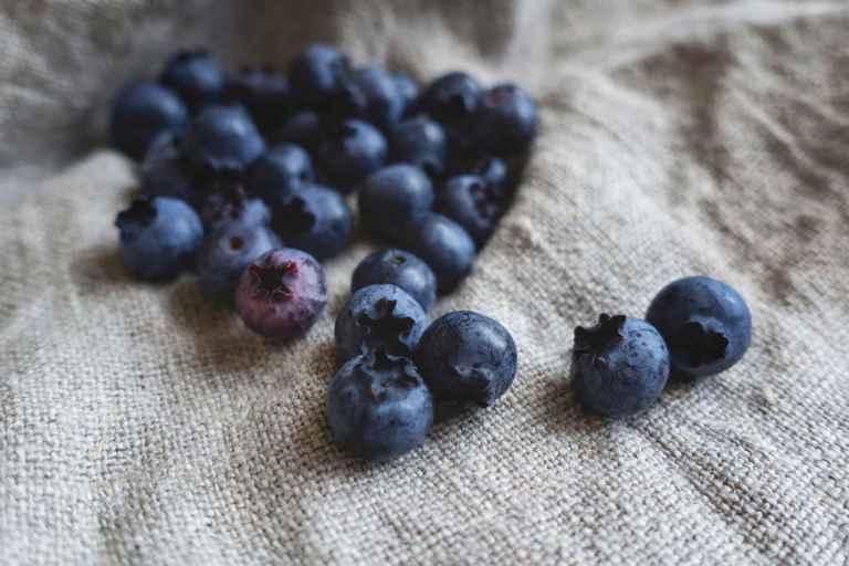 Les vertus des flavonoïdes des myrtilles