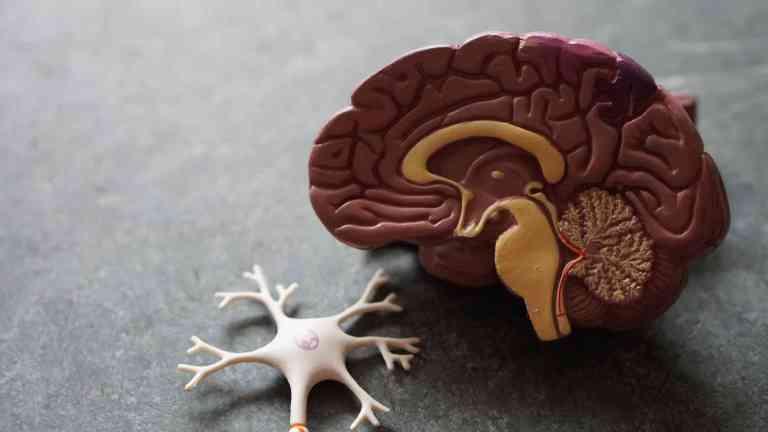 Notre cerveau est fait de nourriture