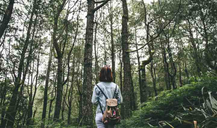 Passer au moins 2h par semaine dans la nature est lié à une bonne santé et à un bien-être