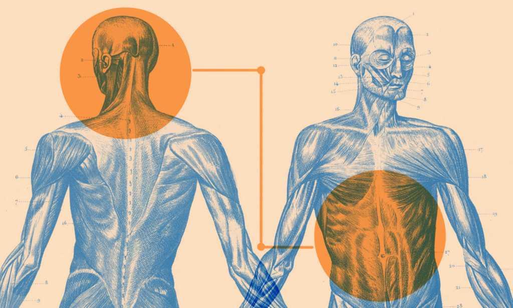Découverte d'une connexion intestin-cerveau en lien avec l'obésité